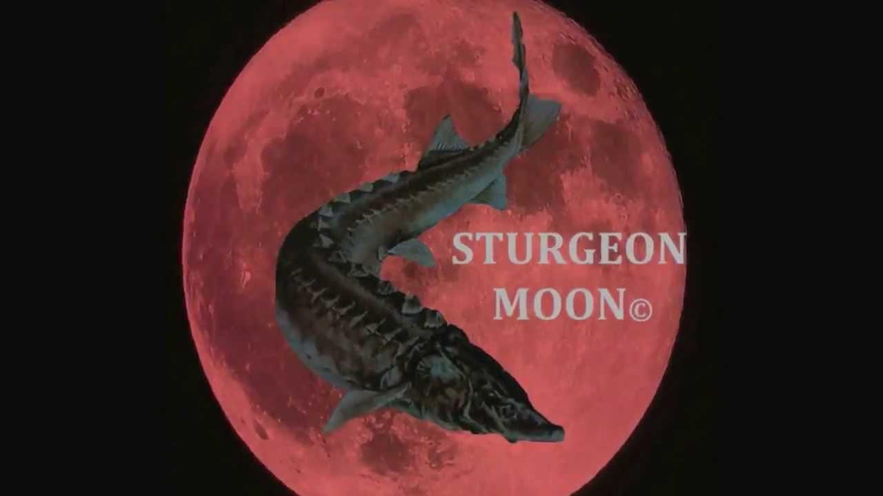 sturgeon moon | Love L.A.M.B