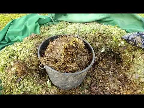 Вопрос: Горячая трава . Что это такое И как ее заготовить?
