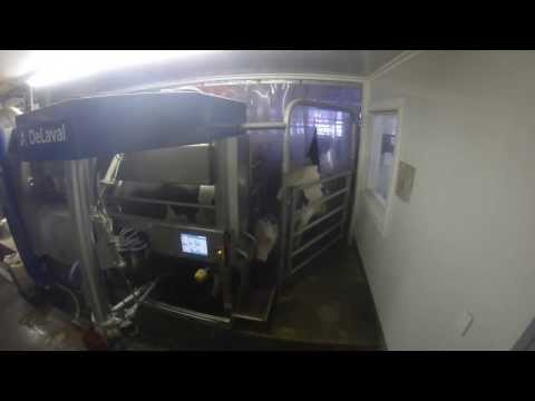 Delaval VMS barn operating- Great Brook Farm (Gopro HD)