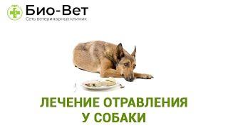 Лечение отравления у собаки. Ветеринарная клиника Био-Вет.