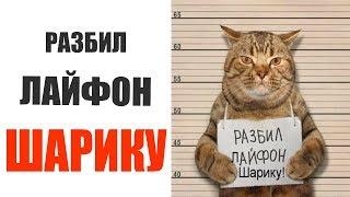 Лютые приколы 2019  РАЗБИЛ ЛАЙФОН ШАРИКУ Смешные видео #7