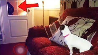 10 Dogs That Spotted A Ghost! Pet Dog Paranormal Encounters