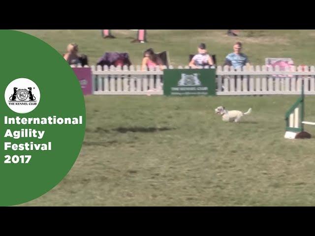 Small Grade 7 Jumping - Part 3 | International Agility Festival 2017