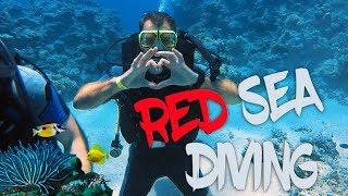 Diving in Egypt. Sharm el sheikh | Дайвинг в Египте. Шарм эль шейх