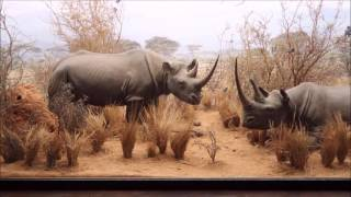 Hall of African Mammals at Natural History Museum of Los Angeles County