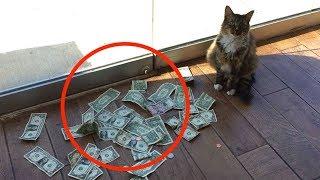 Diese Katze verdient jeden Tag eine menge Geld