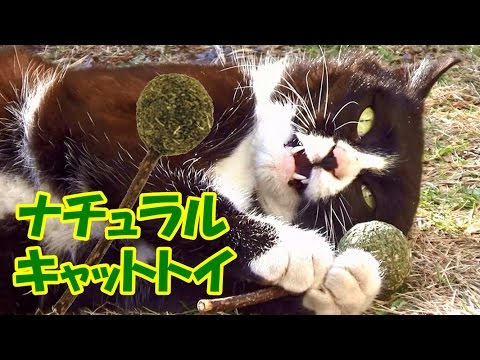 さくら猫ハチ吉、ナチュラルキャットトイに大興奮!
