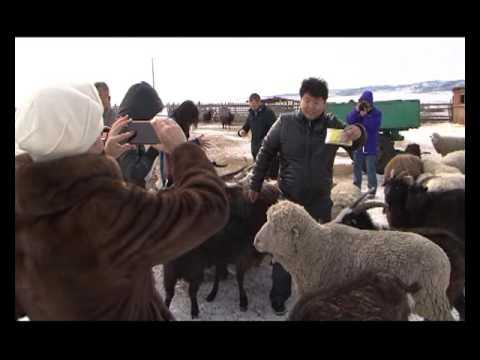 Фермири козів відео фото 696-985