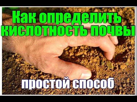 Как определить кислотность почвы с помощью уксуса? Легкий способ.ДАЧА УДАЧИ