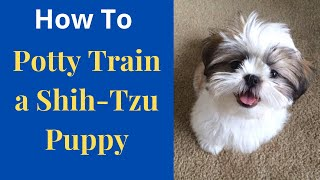How to potty train your ShihTzu puppy? The Easiest Method Possible...