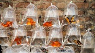 Aquarium Fish Market of Kolkata Galiff Street.