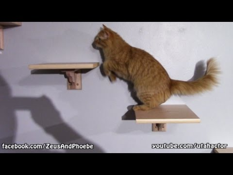 DIY Custom Cat Shelf U0026 Stairs
