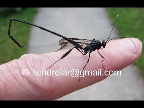 Un insecte à