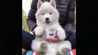 Cute and Funny Dog Videos 🐕😍 Funny Videos - Funny Animals - Try Not To Laugh