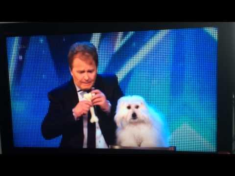 Dog speaking on Britain got talent