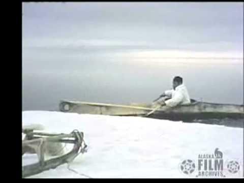 Alaskan seal hunter uses umiak (sea kayak) to retrieve prey