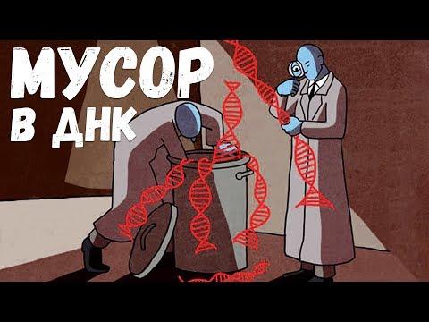 Зачем нам мусор в ДНК? Александр Панчин на QWERTY