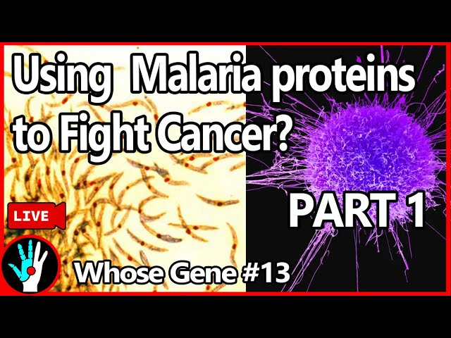 Using HIV + Malaria... to Fight Cancer? - Whose Gene #13