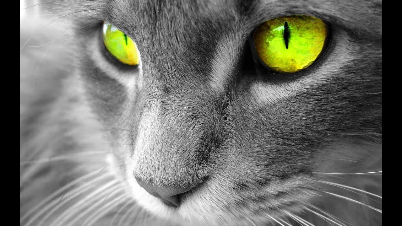 Interpretar sueos  Significado de soar con gatos o un gato
