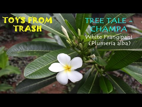 Tree Tale Champa English Youtube
