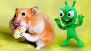 PEA PEA Plays With Hamster 🐿 Stop Motion Play Doh Cartoons