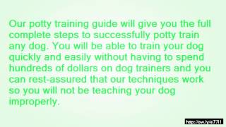 How To House Train A  Year Old Dog