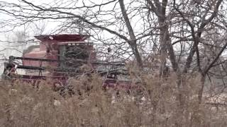 case ih 2388 combine soybean harvest in superior charter township