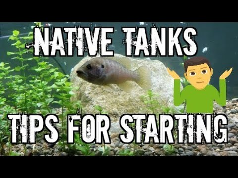 Native Fish Tank! Everything You Need To Know!