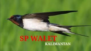 Download Mp3 Suara Burung Walet Mp3 | Sp Anakan | Walet Tv