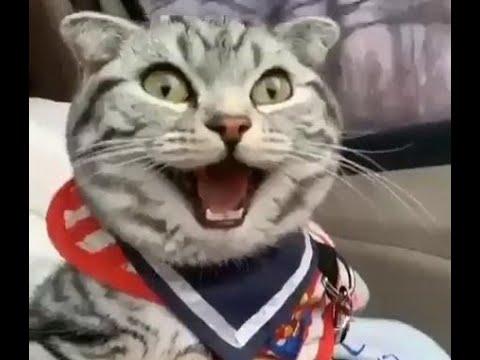 Прикольные кошки и их друзья! Смешное видео с котами, кошками и собаками!