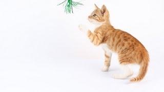 Игра Кошки Мышки. Реальное Видео - 3