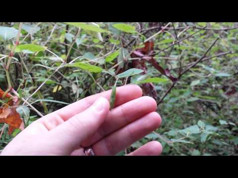 Jewelweed Projectile Seeds at Tryon Creek State Park - Mr. Riedl