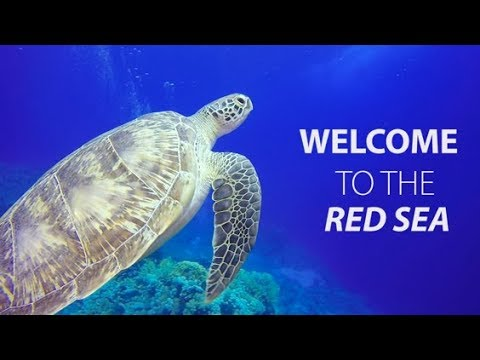 Welcome to the Northern Red Sea