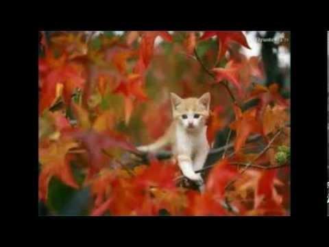 Jesen u meni - Parni Valjak :-)