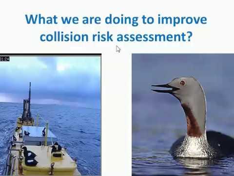 Annex IV Webinar #8: Collision Risk - Understanding and Resolving the Problem in Scotland