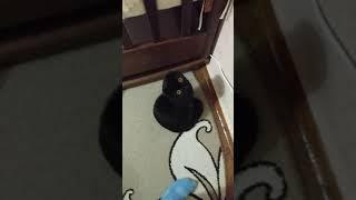 Кошка стоит в углу