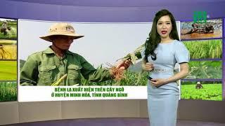 VTC14   Thời tiết nông vụ 18/04/2018   Đôi lời nhắn nhủ với bà con trồng cam. bưởi ở Hưng Yên