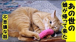 【猫 不思議な猫】あの世の娘が猫に入ってお盆に帰ってきた話・招き猫ちゃんねる thumbnail