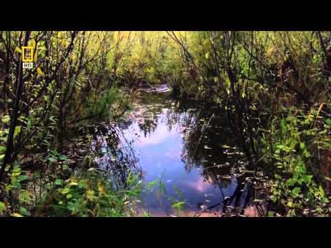 Nature's Engineers The Dam Beaver