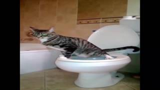 cat peeing everywhere | That's how i trained my cat to stop peeing everywhere