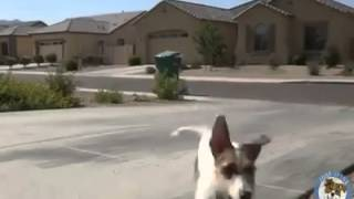 Smart Dog...the Best Trained Dog Ever.