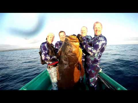 Spearfishing Central America