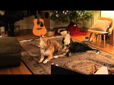 Singing Dogs - Hell Blues