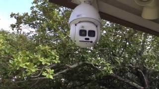 Starlight Laser PTZ Dome Camera