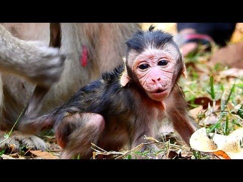 Terrible screaming newborn!!! New baby crying loudly cos mum not hug, Baby want mum grooming 277