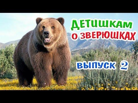 Детям о животных -2! Медведь!Тигр!Поросенок!Кенгуру! Развивающее видео/About animals for toddler!