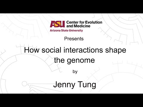 How social interactions shape the genome | Jenny Tung