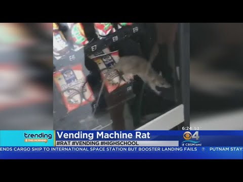 Ditch - Oh Look There's A RAT In The Vending Machine!