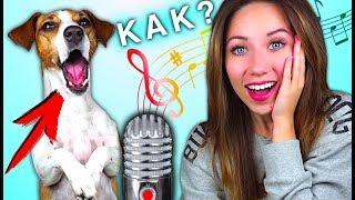 МОЯ СОБАКА ПОЁТ КАК НАУЧИТЬ СОБАКУ ПЕТЬ - дрессировка собак | Elli Di Pets