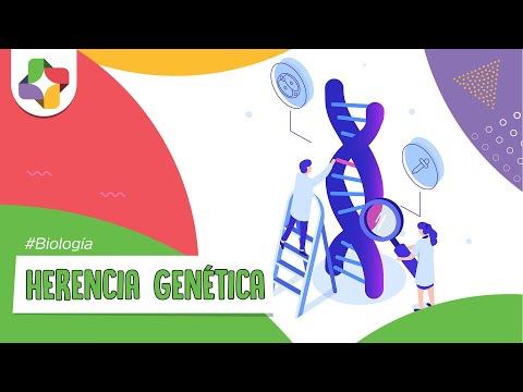 Bases genéticas de la herencia  - Biología - Educatina